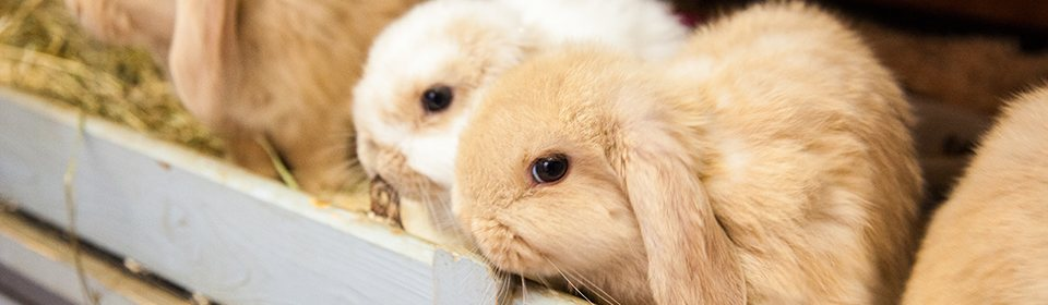 Rabbits7
